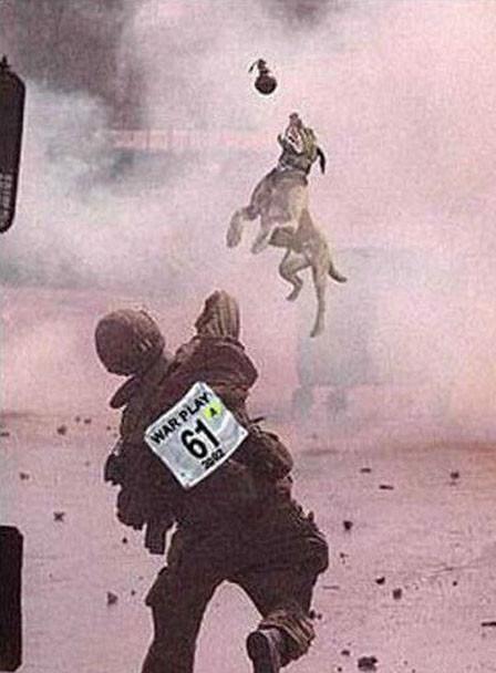 anjing dalam medan perang.