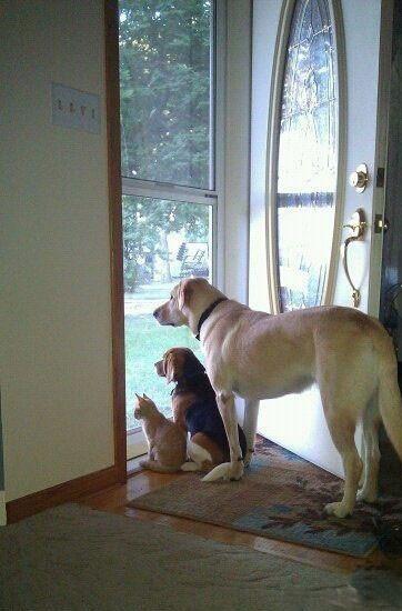 anjing menunggu kepulangan majikan