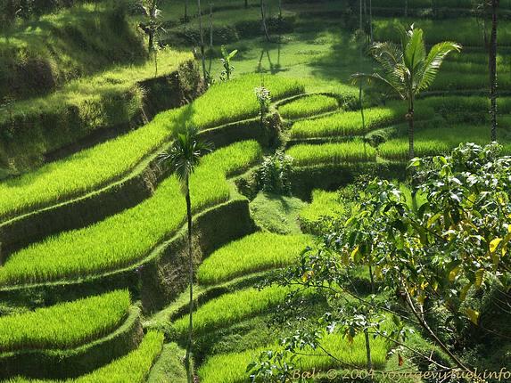 tanah subur indonesia
